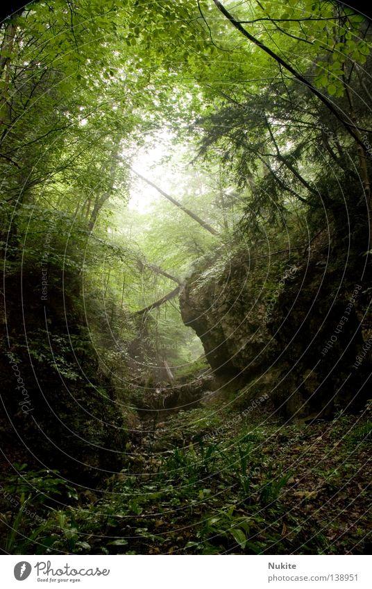 Nach dem Regen Natur Baum Wald Wege & Pfade Nebel Felsen