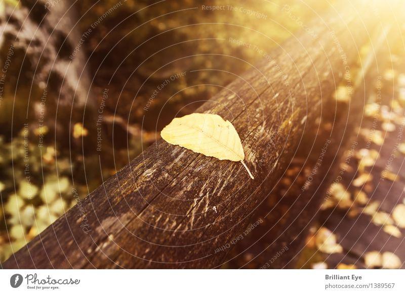Herbstlich gebettet Ausflug Ferne wandern Natur Pflanze Baum Blatt Park Wald liegen authentisch einfach Wärme weich gelb gold Stimmung Geborgenheit Farbe