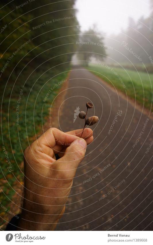 Eichelnäher Mensch maskulin Hand Finger 1 45-60 Jahre Erwachsene Gefühle festhalten Wege & Pfade Asphalt Nebel Herbst Baum grün finden ansammeln Perspektive