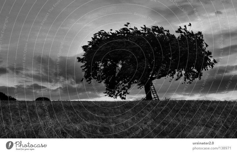 Der Baum 9 (am Abend vor dem großen Regen) Himmel weiß Sommer Blatt schwarz Wolken Ferne Leben Landschaft Feld Deutschland Wind Horizont Ast Getreide