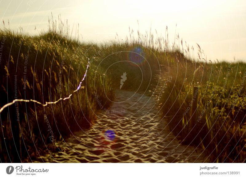 Gleich ... Strand Weststrand Darß Gras Ferien & Urlaub & Reisen Gegenlicht Physik schön Küste Meer Farbe Sand Stranddüne strandübergang fischland-darß Himmel