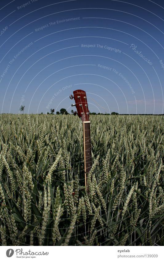 6-Saitiges Unkraut Feld Landwirtschaft Mechanik Saite Saiteninstrumente Roggen Weizen Hafer Hirse Sommer Horizont Schönes Wetter Ernährung Pflanze grün Holz
