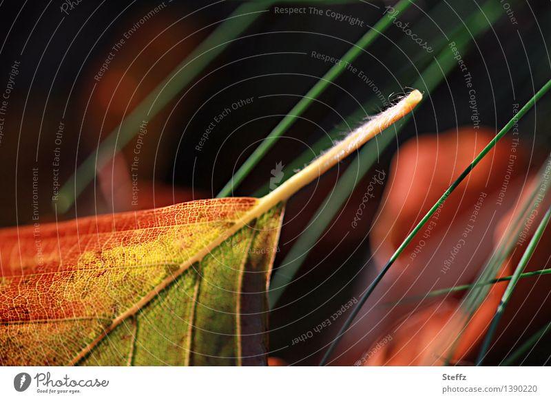 Herbstblatt liegt im Gras Herbstlaub Blattadern Buchenblatt Waldboden herbstlich Blätter fallen im Gras liegen Herbstfoto schönes Herbstlicht Herbstfärbung