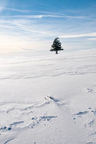 Ä Tännchen, Ä Tännchen! Natur Pflanze blau Weihnachten & Advent weiß Baum Einsamkeit Ferne Winter Umwelt Schnee Eis stehen einzeln Schönes Wetter Frost