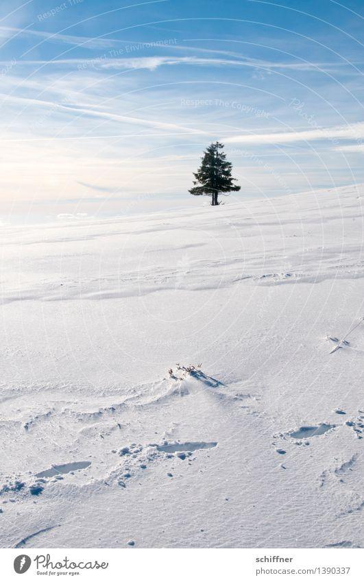 Ä Tännchen, Ä Tännchen! Umwelt Natur Sonnenlicht Winter Schönes Wetter Eis Frost Schnee Pflanze Baum stehen blau weiß Einsamkeit einzeln 1 Tanne Nadelbaum Ferne
