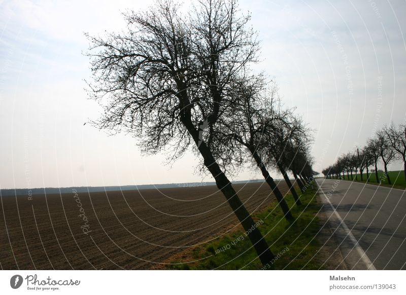 schräge Allee Baum Feldrand Außenaufnahme Verkehrswege Straße Strassenbäume verrückt Neigung