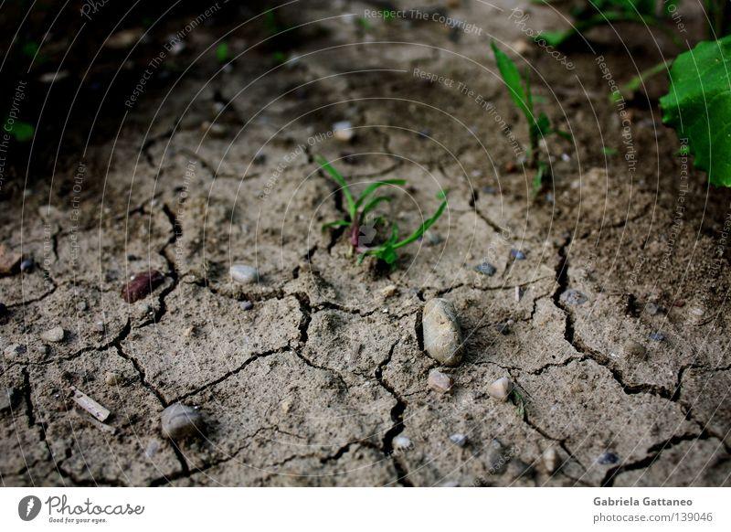trocken Farbfoto Leben Erde Sand Regen Gras Wiese Feld Stein Wachstum braun grau grün rot Hoffnung Afrika Erdbeben Zwischenraum Lücke Neuanfang Reifezeit