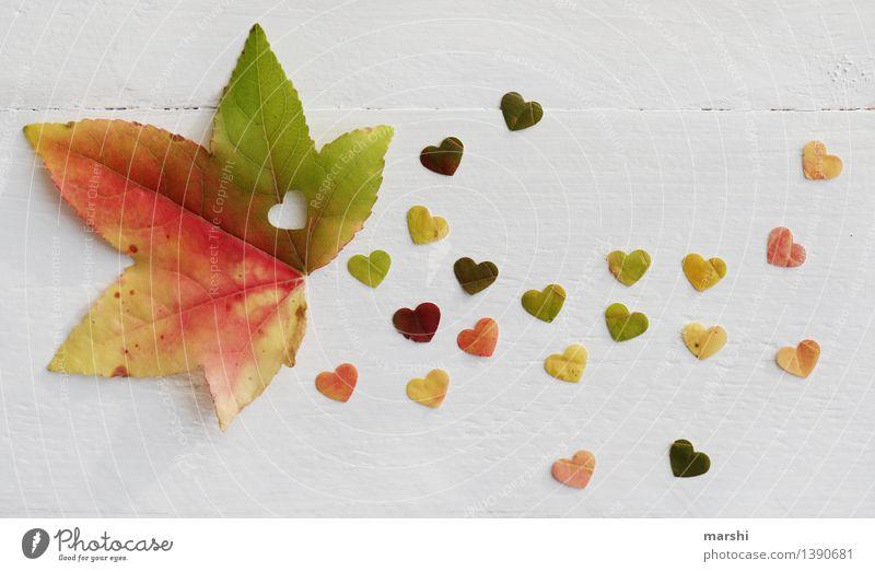 Herbstliebe II Natur Pflanze Baum Blatt Gefühle Stimmung Herz herzlich Liebe Ahorn mehrfarbig herbstlich herzförmig Farbfoto Innenaufnahme Studioaufnahme