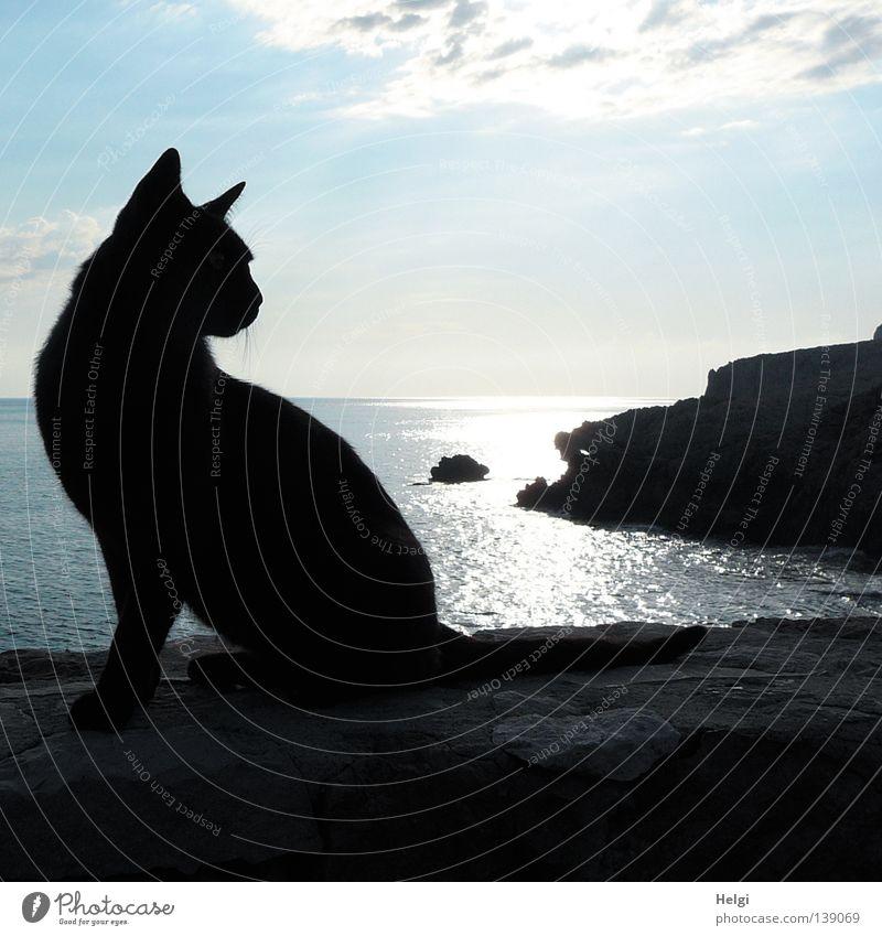 black beauty... Gedeckte Farben Außenaufnahme Textfreiraum oben Morgen Morgendämmerung Licht Schatten Silhouette Gegenlicht Tierporträt Ganzkörperaufnahme