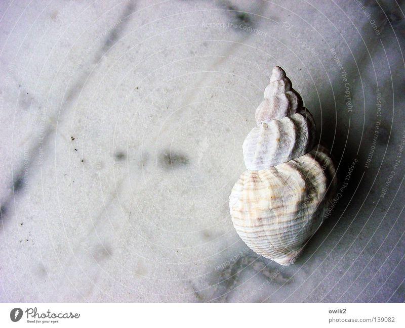 Landgang Natur weiß Einsamkeit ruhig Tier klein Linie Wohnung Ordnung leer Vergänglichkeit Fisch Gelassenheit Teile u. Stücke verfallen Glätte