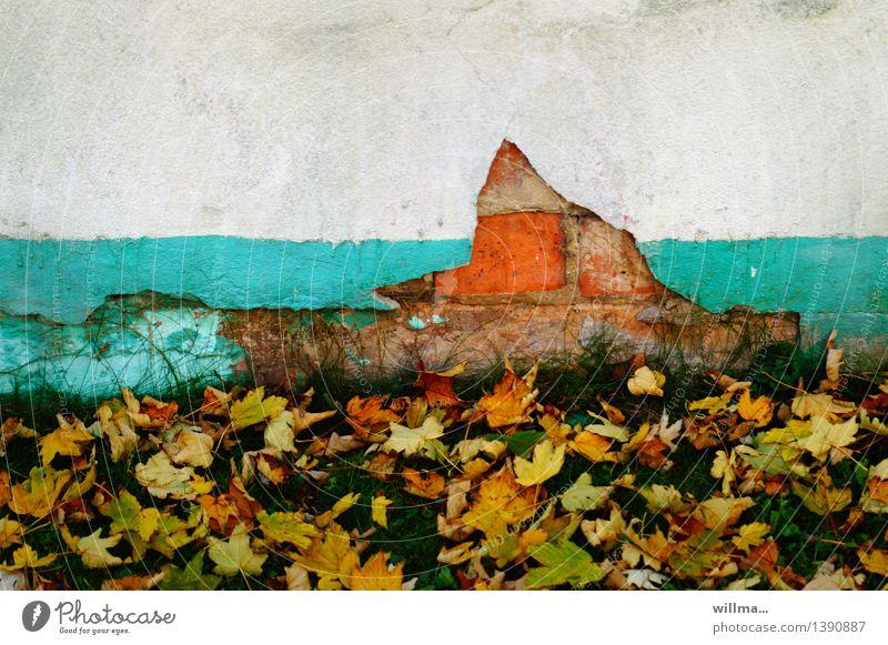 abgeblättert. weiß Blatt Wand Herbst Mauer kaputt verfallen türkis Herbstlaub abblättern Putzfassade Backsteinfassade Klimagipfel