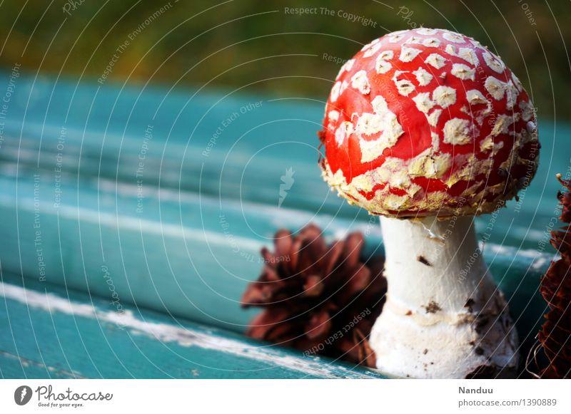 Glückspilz Umwelt Natur Pflanze Herbst Pilz Fliegenpilz Zapfen Glücksbringer Fröhlichkeit blau mehrfarbig rot türkis weiß Euphorie Gift Rauschmittel Naturdroge