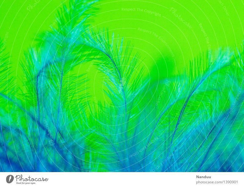 Kuschelzeit blau grün Dekoration & Verzierung Feder ästhetisch weich Geborgenheit Kuscheln angenehm Flaum