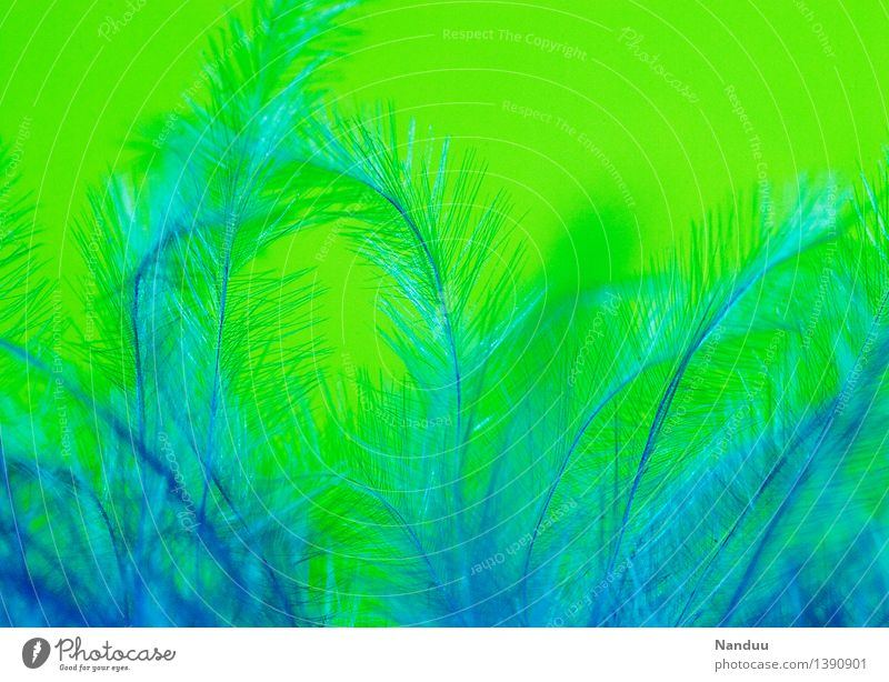 Kuschelzeit Feder ästhetisch weich blau grün Geborgenheit Kuscheln angenehm Flaum Dekoration & Verzierung Farbfoto mehrfarbig Detailaufnahme Makroaufnahme