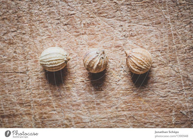 Die drei vom Koriander Essen Foodfotografie Holz außergewöhnlich Lebensmittel braun mehrere Ernährung genießen Kräuter & Gewürze lecker Bioprodukte Samen Kugel