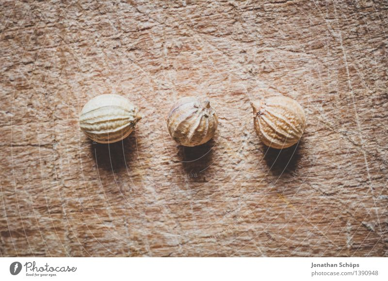 Die drei vom Koriander Lebensmittel Kräuter & Gewürze Ernährung Essen Bioprodukte Vegetarische Ernährung Slowfood außergewöhnlich braun Samen Korn Würzig