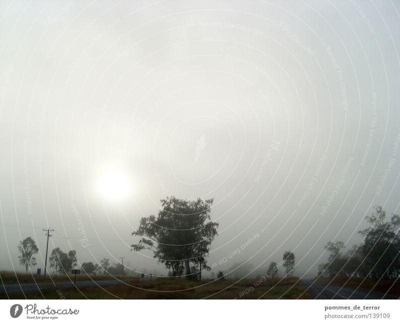 morgens in rockhampton ruhig Landschaft Nebel Idylle Australien Pastellton
