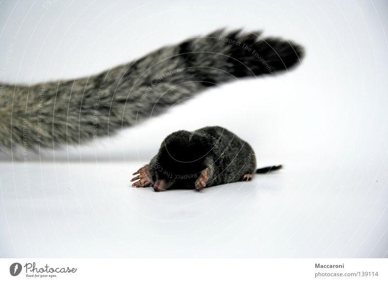 Maulwurf Vs Katze Flasche Erde Wiese Fell Krallen Jagd liegen Traurigkeit warten dreckig dunkel süß braun schwarz weiß Trauer Tod Jäger töten Flucht Schwanz