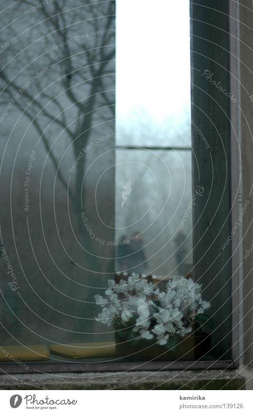 dreifaltigkeit Baum Blume Winter Haus Fenster Traurigkeit Landschaft Religion & Glaube Beton Trauer trist Gebet Baumstamm Beerdigung Gotteshäuser