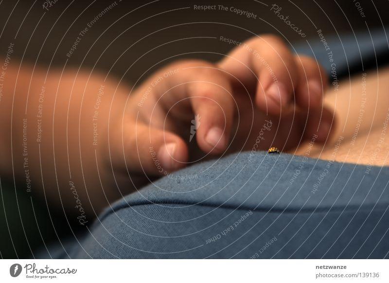 haben wollen Kind Hand Finger Wunsch fangen Konzentration Seite Griff Käfer Vorsicht Kinderhand