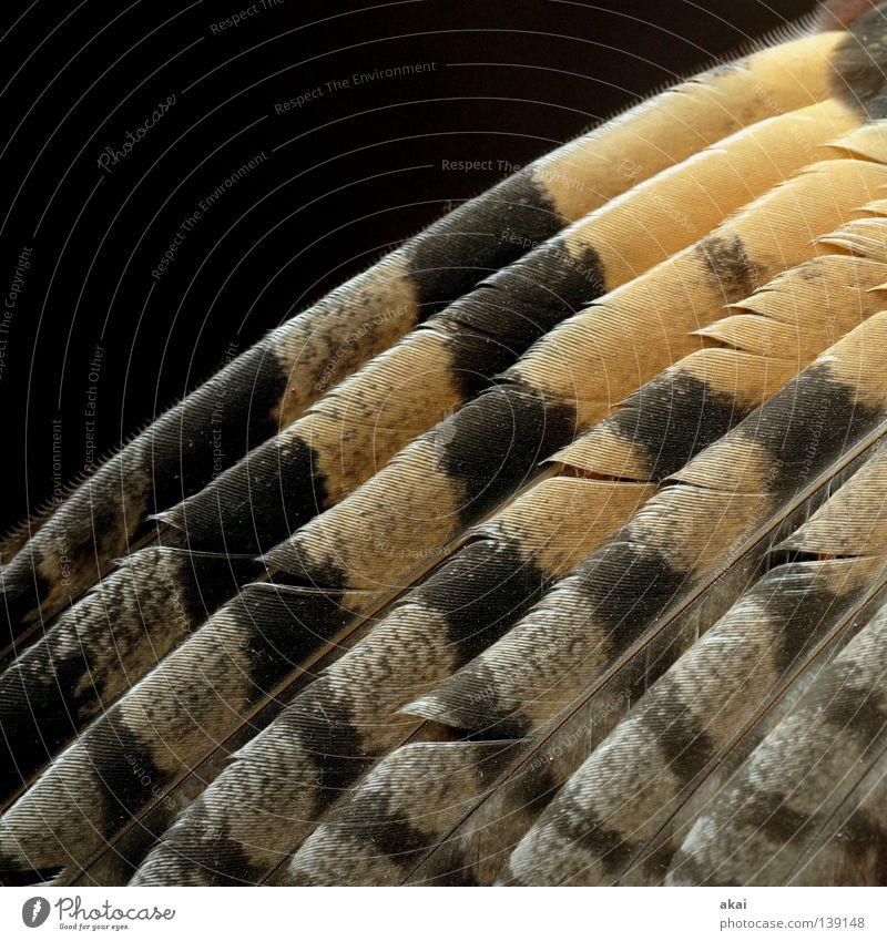 Flieg,kleiner Falke! schön Himmel Tier Luft Vogel Angst Lebensmittel fliegen Feder Flügel Konzentration Jagd Kontrolle Wachsamkeit Fressen