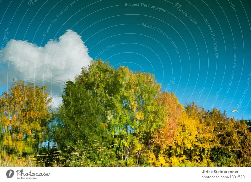 Herbst im See Umwelt Natur Landschaft Pflanze Wasser Himmel Wolken Schönes Wetter Baum Sträucher Seeufer Teich leuchten nass natürlich Wärme ruhig Spiegelbild