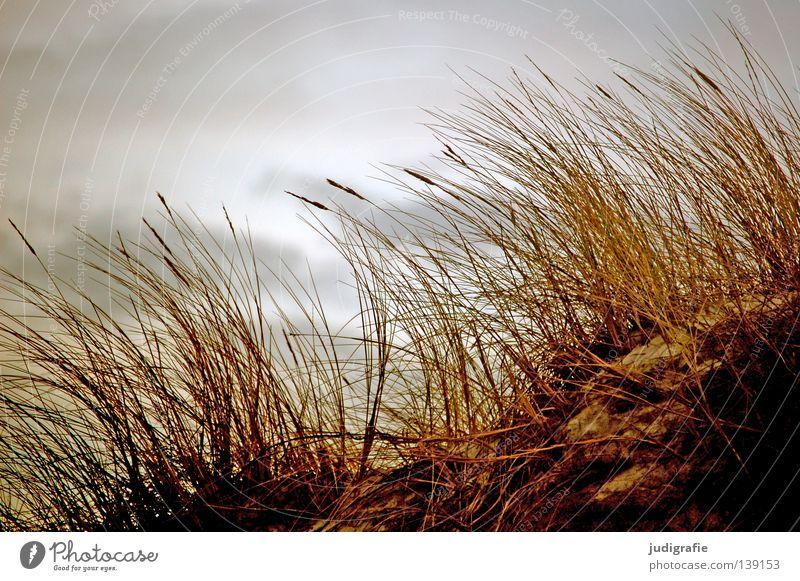 Gras Strand Küste Umwelt Wolken schlechtes Wetter Wachstum Pflanze Weststrand Darß Farbe Himmel Stranddüne Sand Natur strandhafer fischland-darß