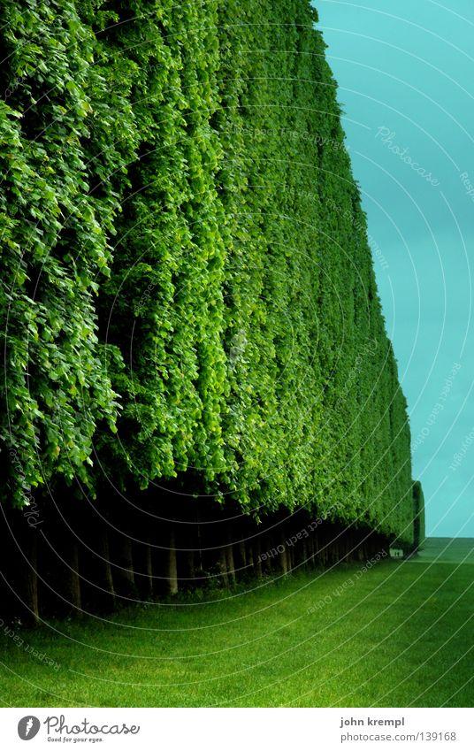 ab durch die hecke Hecke Gras grün Paris Frankreich Versailles Ludwig XIV Sträucher Baum Blatt türkis Wolken Geometrie Wand Mauer Wahrzeichen Denkmal Garten