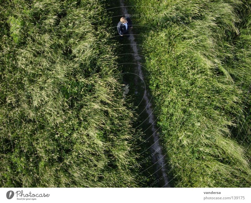 Die andere Sicht der Dinge - Vogelperspektive Mensch Mann grün Wiese Vogel Dresden Luftaufnahme