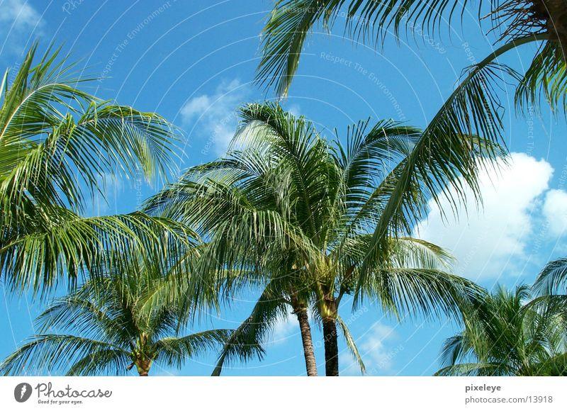 Palmen Himmel Palme Bali