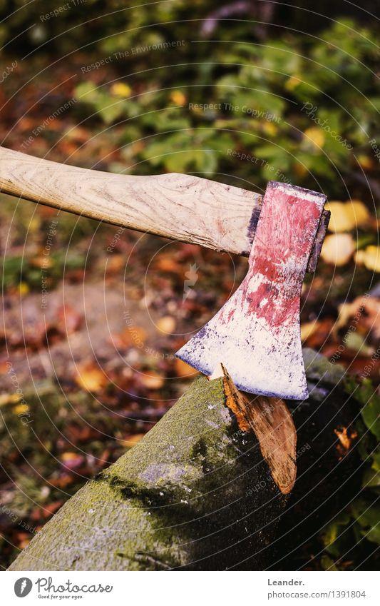 Axt II Umwelt Garten Urwald Arbeit & Erwerbstätigkeit machen ästhetisch braun grün rot Wald Baum fällen Herbst Holz Waldarbeiter Farbfoto Gedeckte Farben