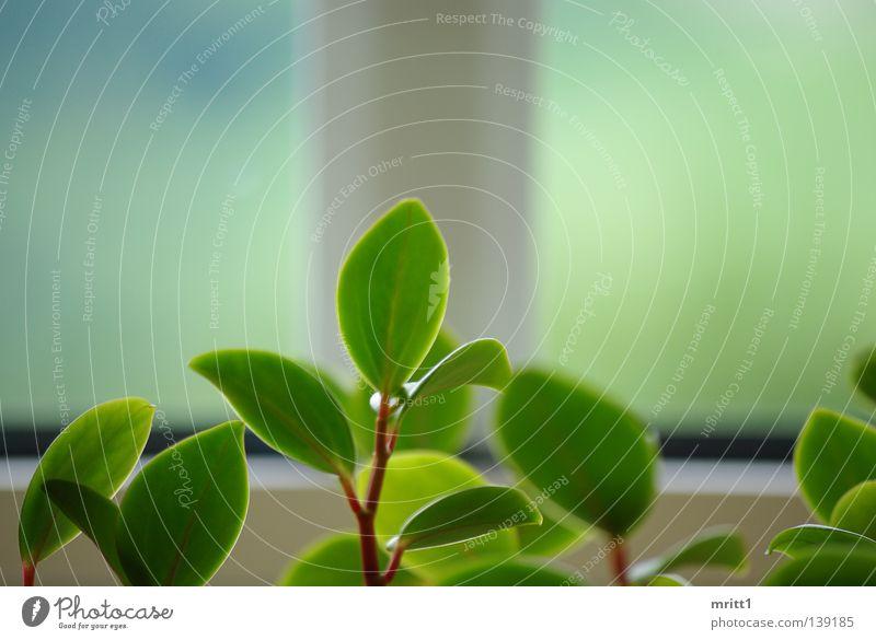 es grünt so grün Fenster Tiefenschärfe Blume Blumenausschnitt grün-weiß Natur im Wohnzimmer ohne Blüten