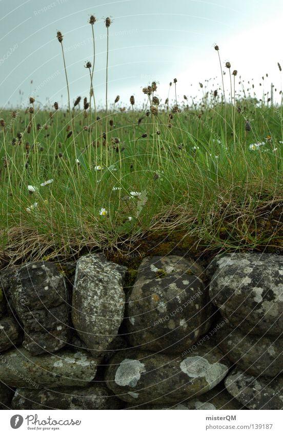 Steinmauer am irischen Newgrange. Mauer bewachsen Gras Halm Blume Moos alt historisch Grabmal Steinzeit schlechtes Wetter Natur Altertum Ruine Europa Trauer
