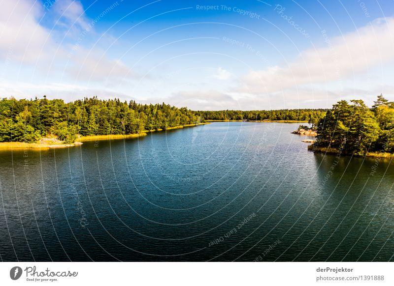 Sommer in den Schären bei Stockholm Natur Ferien & Urlaub & Reisen Pflanze Meer Landschaft Tier Freude Ferne Umwelt Küste Glück Freiheit Felsen Tourismus
