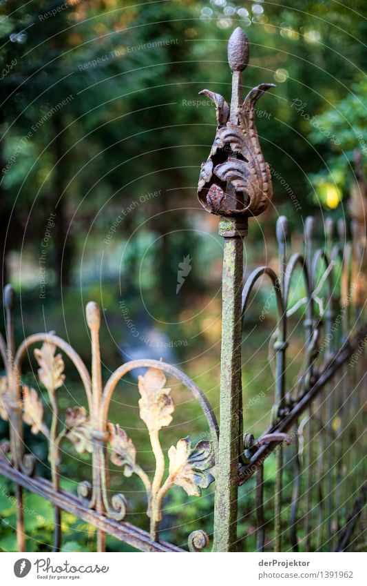 Ruhe hinterm Zaun Natur Pflanze Sommer Blatt Umwelt Traurigkeit Blüte Tod Garten Park Dekoration & Verzierung Schönes Wetter Trauer Glaube Blütenknospen