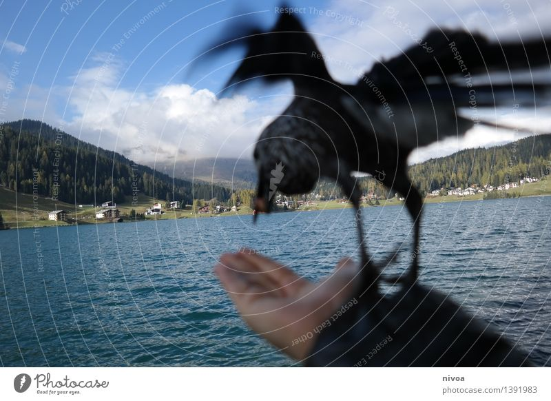 abflug Himmel Natur blau Wasser Hand Wolken Tier Berge u. Gebirge Herbst Essen Wege & Pfade fliegen See Vogel gehen wild