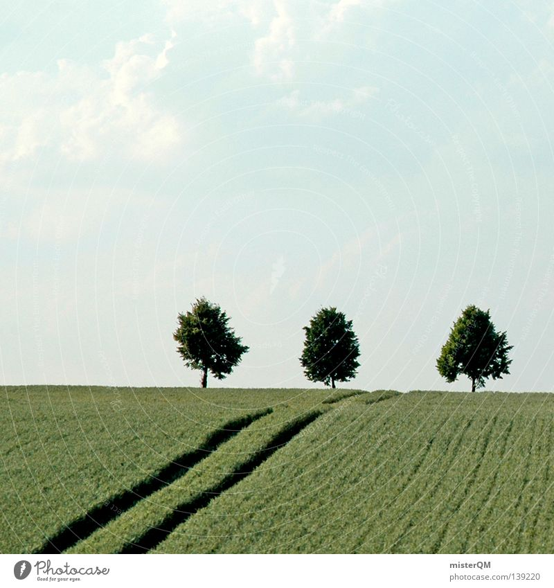 Die Drei neben der Tankstelle. Natur blau weiß schön Baum Pflanze Wolken ruhig Landschaft Freiheit Wärme Stimmung Linie Deutschland Feld Ordnung