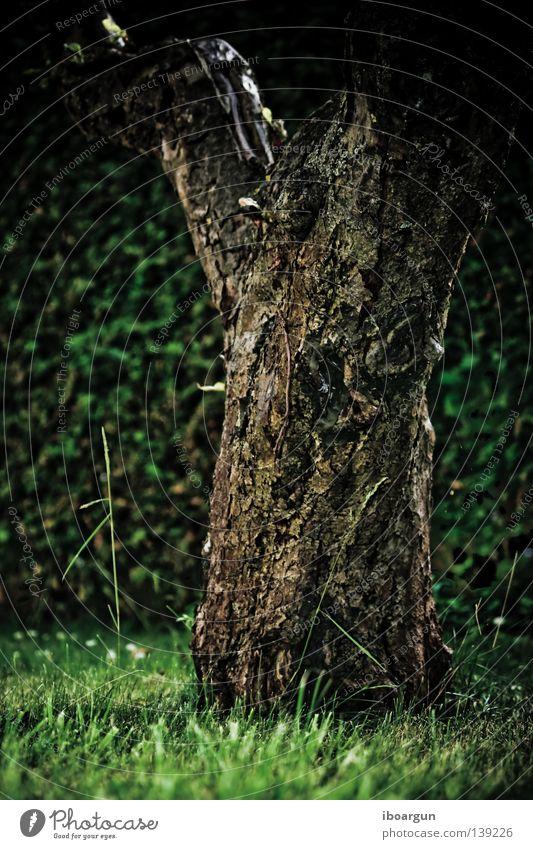 lonely Baum Wiese Feld grün Sommer Umweltschutz Kohlendioxid ökologisch einzeln abgelegen ruhig Pflanze Erholung frei feel free o2 Einsamkeit friedlich far away