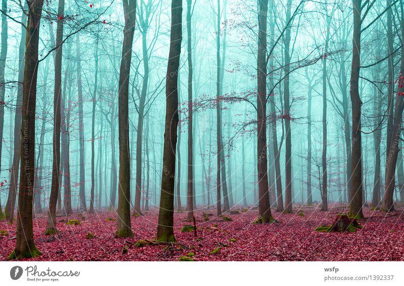 Zauber Wald in rot und türkis Frühling Herbst Nebel Baum Blatt träumen Surrealismus fantasie Märchenwald Zauberwald mystisch verfärbt bezaubernd filter