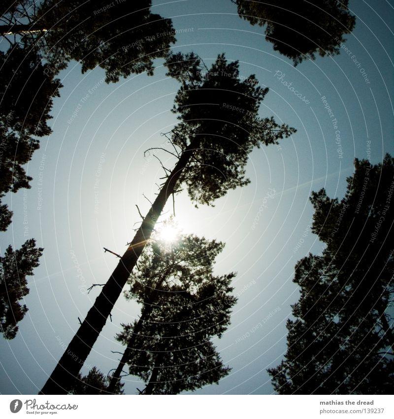 LICHTSCHEIN Baum Pflanze grün Wald Lebewesen Biologie organisch Organ Photosynthese Park Baumkrone Blatt Blätterdach dünn Gegenlicht Sonnenstrahlen Strahlung