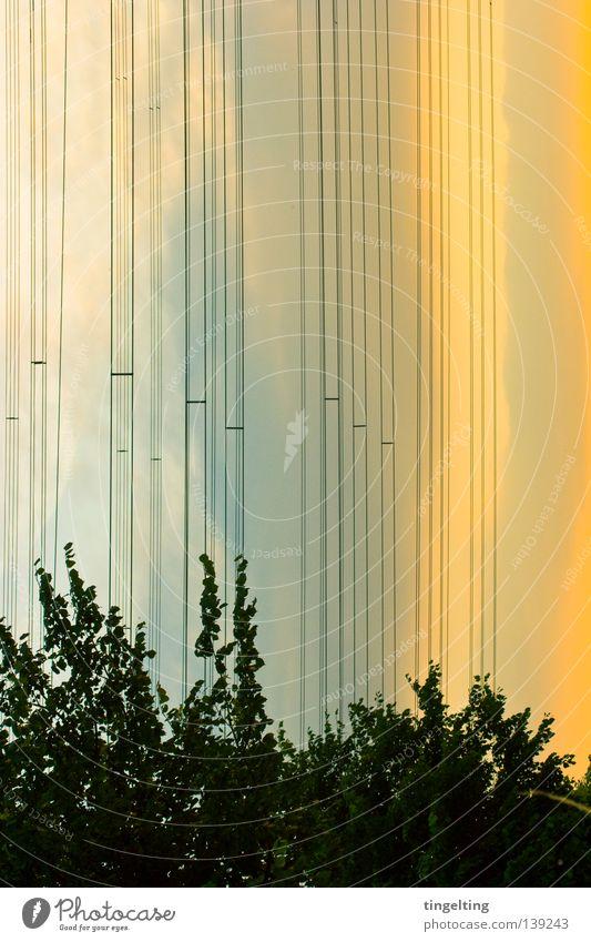 ökostrom Baum Blatt Blattgrün dunkelgrün gelb Wolken Dämmerung Oberleitung Elektrizität parallel mehrere orange blau Himmel hell Abend Kabel Linie viele
