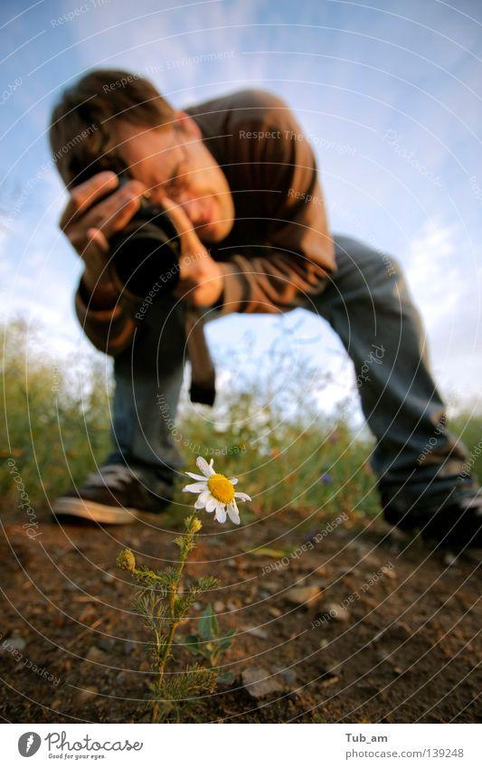 Shooting Star Blume Freude Einsamkeit gelb Blüte Gras Fotografie planen Wachstum bedrohlich Gänseblümchen Stock Single