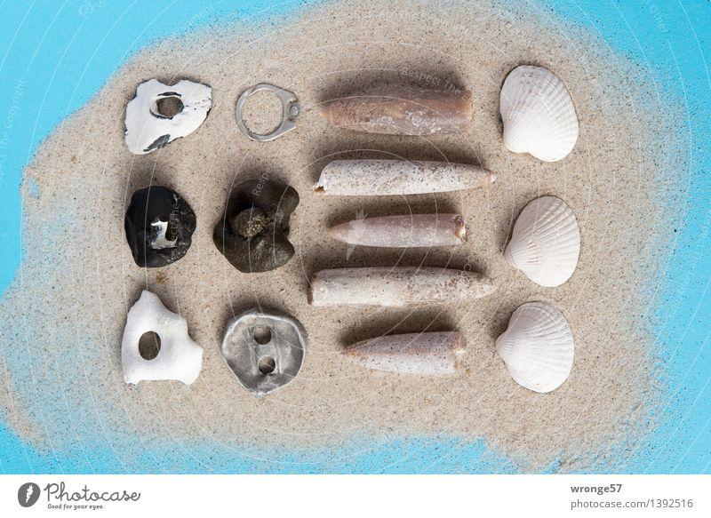 Sammelwut I Kitsch Krimskrams Souvenir Sammlung Sammlerstück Stein Sand alt maritim blau grau schwarz weiß Stillleben Muschelschale Fossilien Metall Metallring