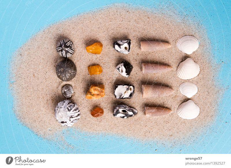 Sammelwut II Kitsch Krimskrams Souvenir Sammlung Sammlerstück Stein Sand maritim blau braun gold schwarz weiß Stillleben Muschel Muschelschale Fossilien