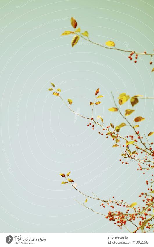 herbstlich Himmel Natur Pflanze blau rot Blatt Umwelt gelb Blüte Herbst natürlich klein oben wild Luft authentisch