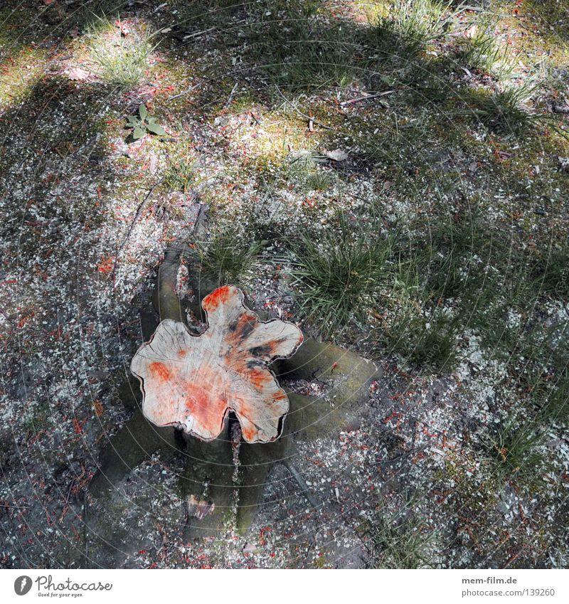 freund baum tot grün Baum Blatt Tod Holz Wege & Pfade leer Papier Baumstamm ökologisch Forstwirtschaft Lücke gefallen matt Abholzung fällen