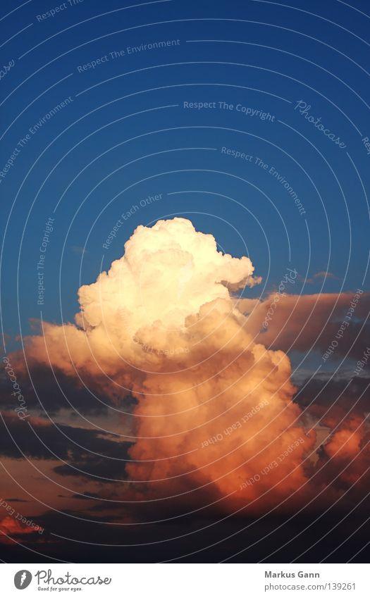 Gewitterwolke Himmel blau weiß rot Sommer Wolken Wetter heiß Urwald Gewitter Kumulus Abendsonne Schwüle Kumulunimbus
