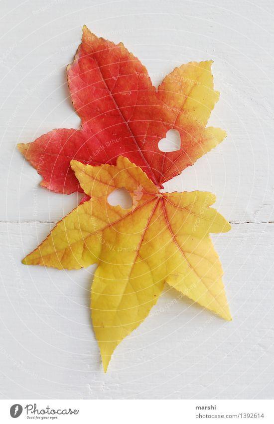 verliebt im Herbst Pflanze rot Blatt gelb Liebe Gefühle Glück Stimmung Paar Zusammensein Freundschaft Fröhlichkeit Herz Romantik Verliebtheit