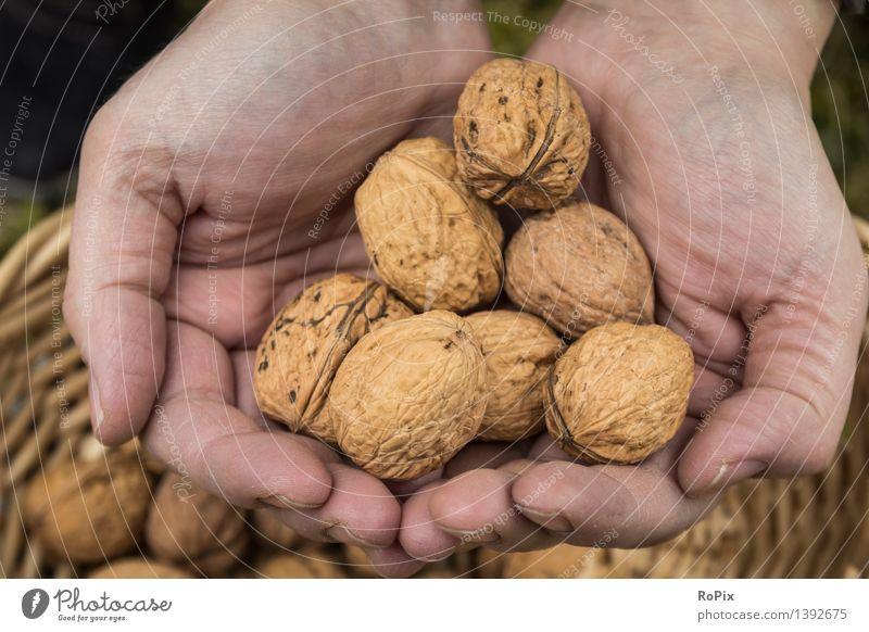 nuts Natur Erholung Hand Gesunde Ernährung Leben Herbst natürlich Gesundheit Lebensmittel Arbeit & Erwerbstätigkeit Frucht Haut genießen kaufen einfach