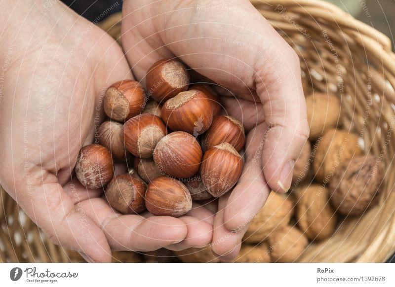 halzelnut Natur Hand Gesunde Ernährung ruhig Umwelt Leben Herbst Gesundheit Garten Lebensmittel Stimmung Arbeit & Erwerbstätigkeit Frucht Zufriedenheit
